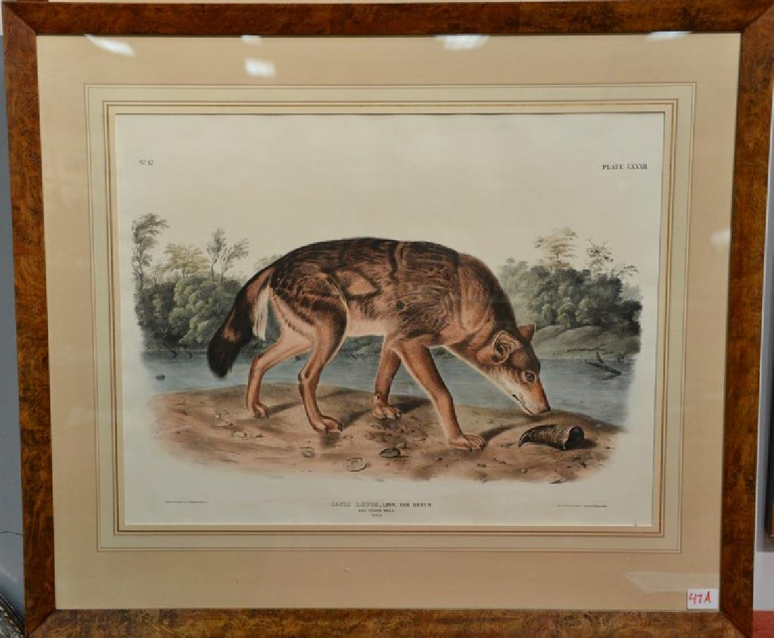 John James Audubon  hand colored lithograph  Canis
