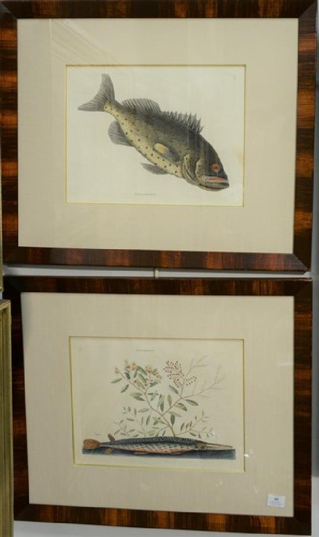 "Mark Catesby  two hand colored engravings  from ""The"