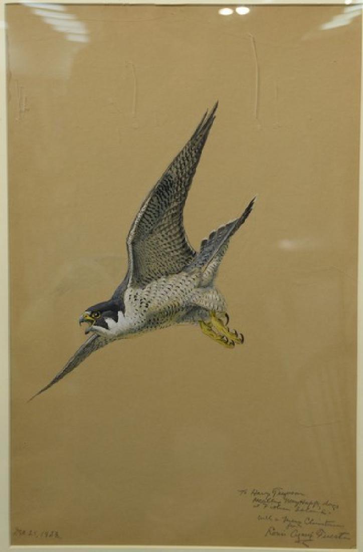 Louis Agassiz Fuertes (1874-1927)  watercolor gouache