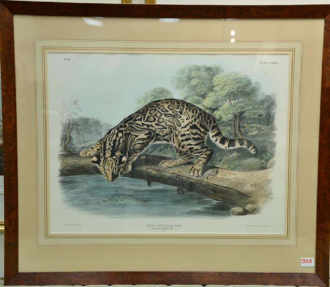 John Woodhouse Audubon  hand colored lithograph  Plate