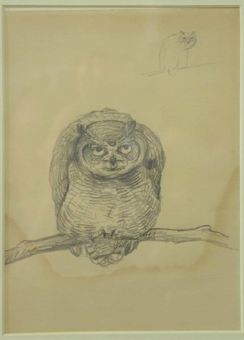 Louis Agassiz Fuertes (1874-1927)  pencil sketch on