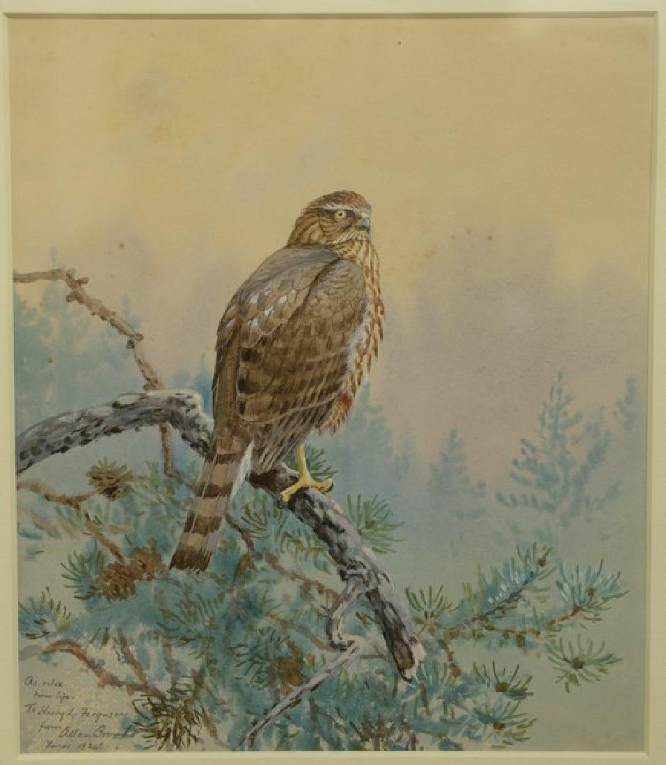 Allan Brooks (1869-1945)  watercolor gouache  Perched