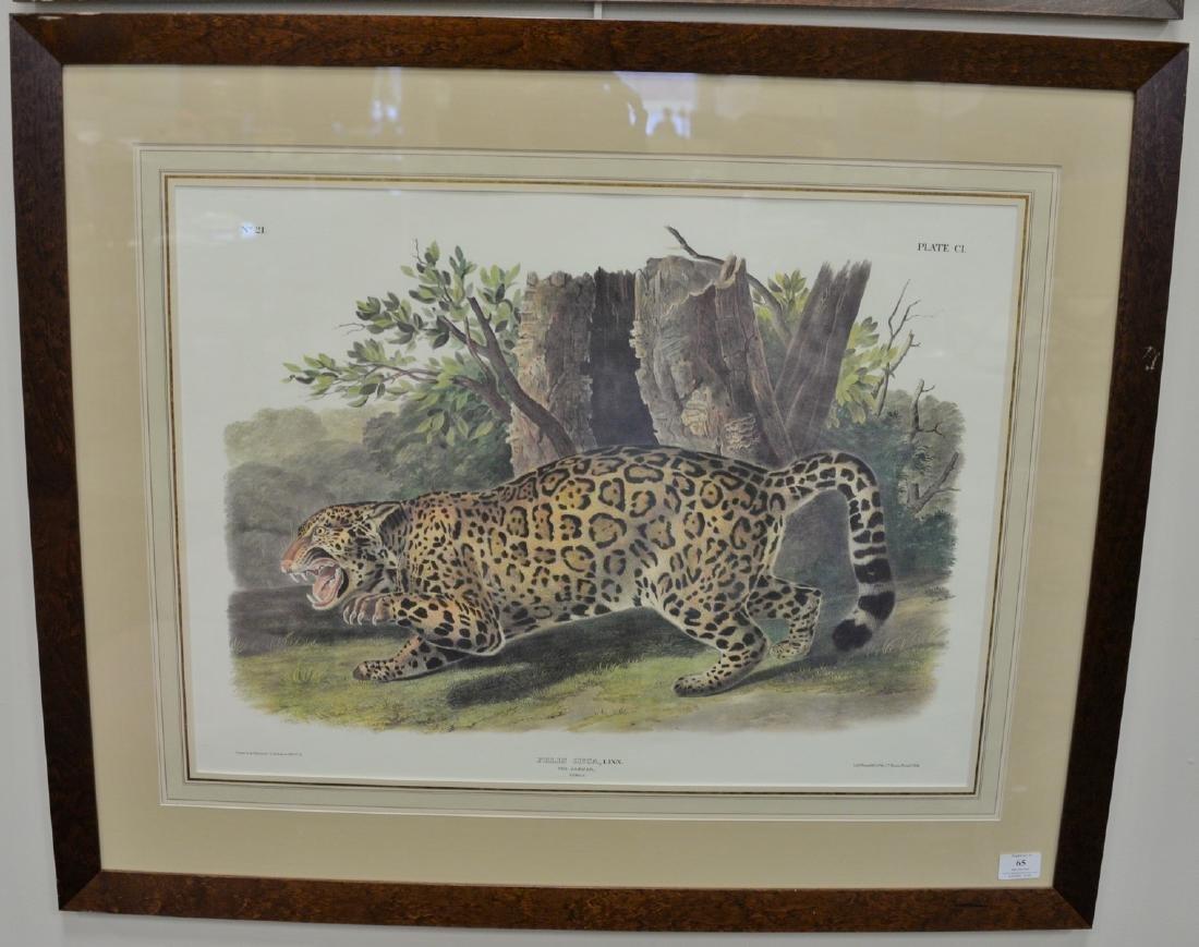 After John James Audubon, print, Felis Onca, Linn The
