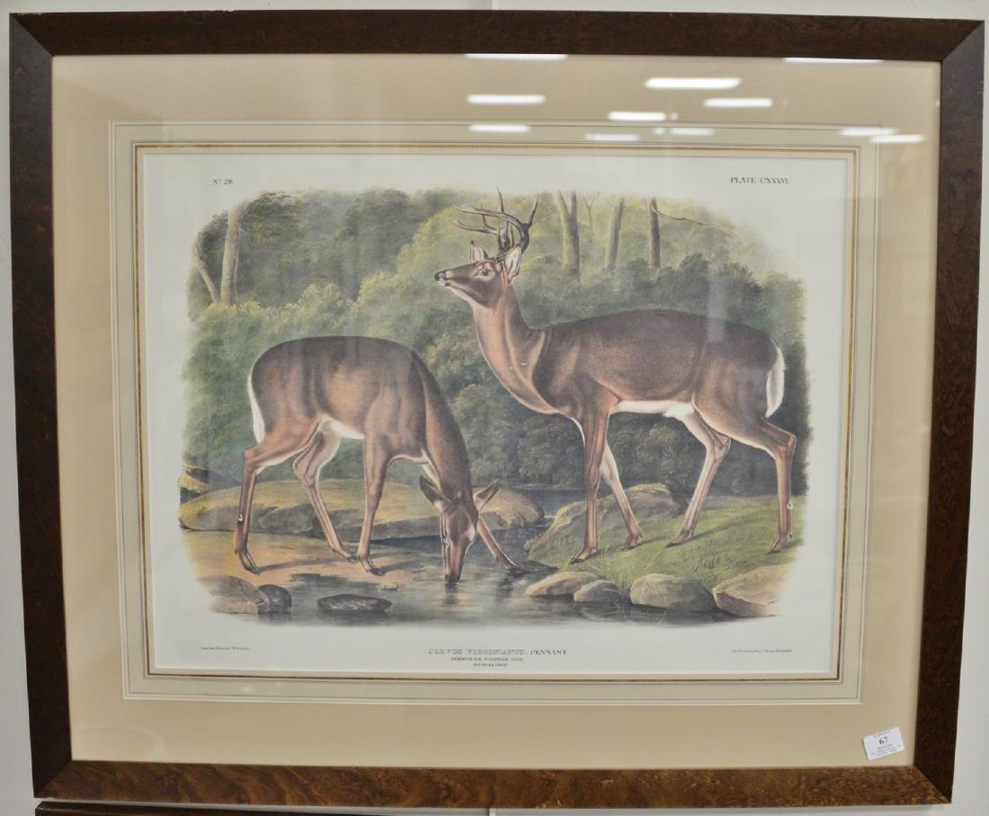 After John W. Audubon, print, Cervus Virginianus,