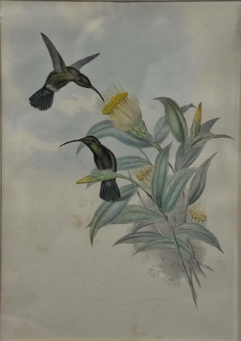 John Gould, hand colored lithograph, Hummingbird,