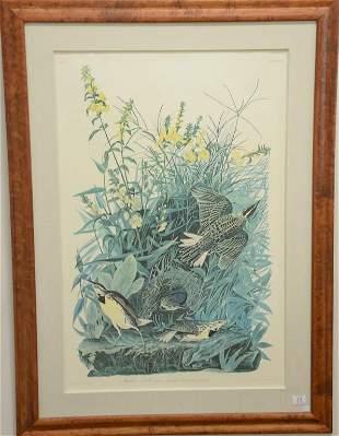 After John James Audubon print Meadowlark large