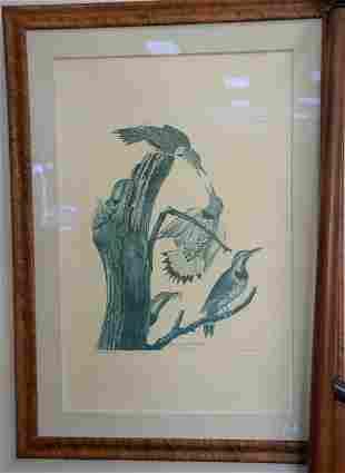 After John James Audubon print Golden Winged