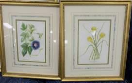 Group of Ten Framed Botanical Prints each inscribed in
