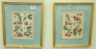 Six Botanical Fruit Engravings, each hand-colored, two