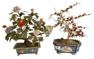 Two Chinese Jade Trees, having flowers and leaves
