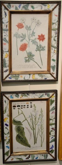 Twelve Botanical Studies, engravings with colors with