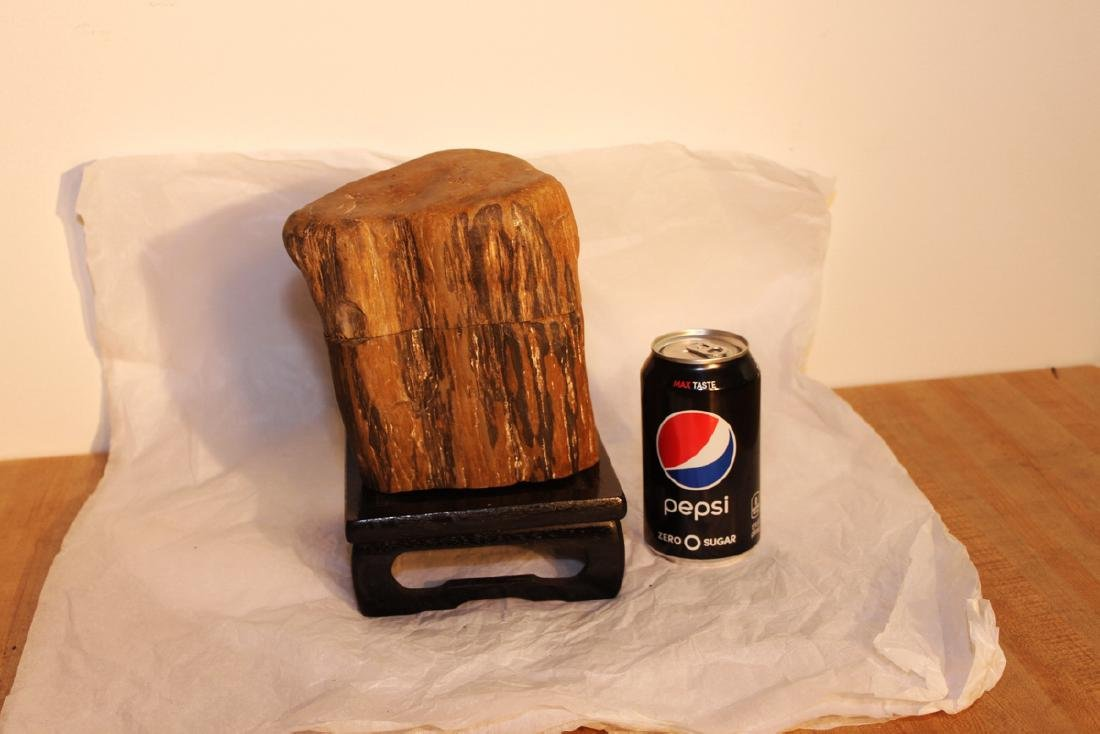 Two Pieces Fossil Wood on Wood Stand
