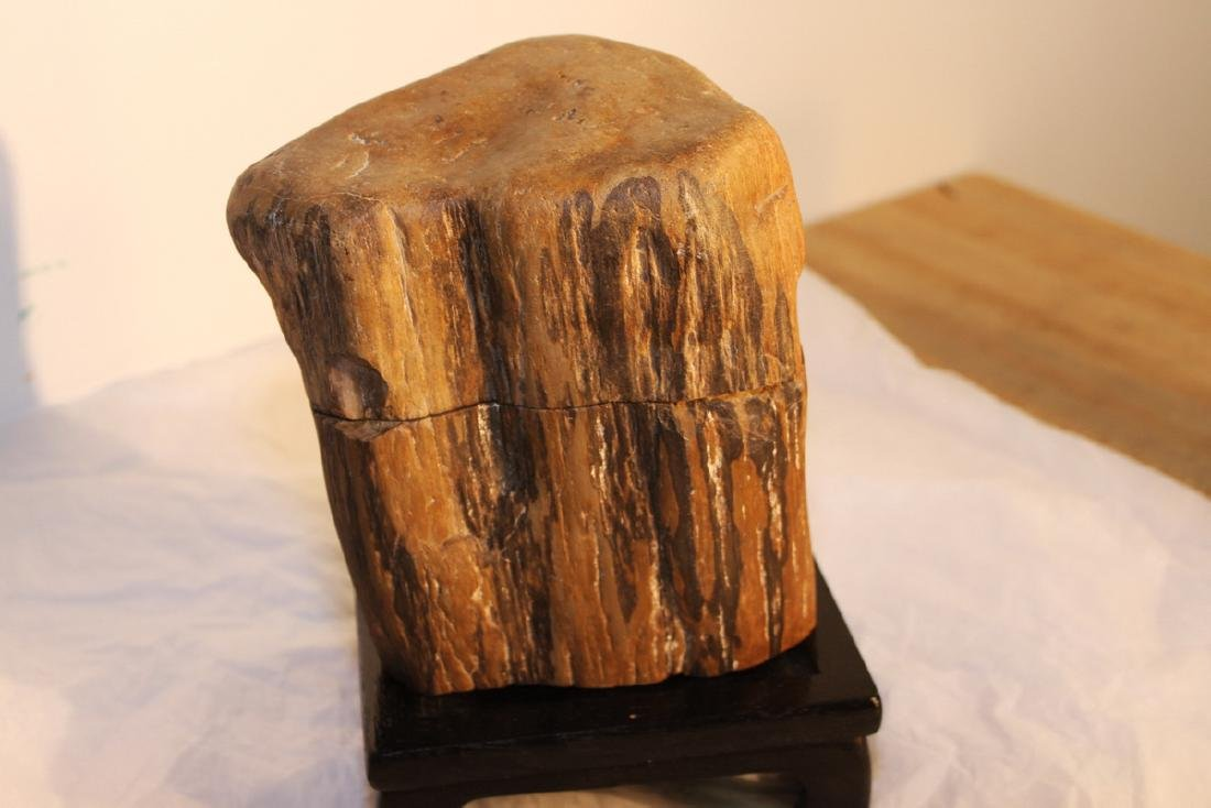 Two Pieces Fossil Wood on Wood Stand - 2