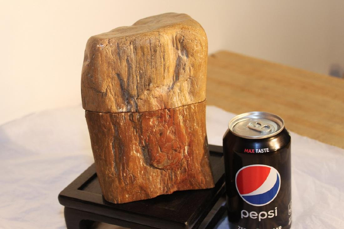 Two Pieces Fossil Wood on Wood Stand - 4