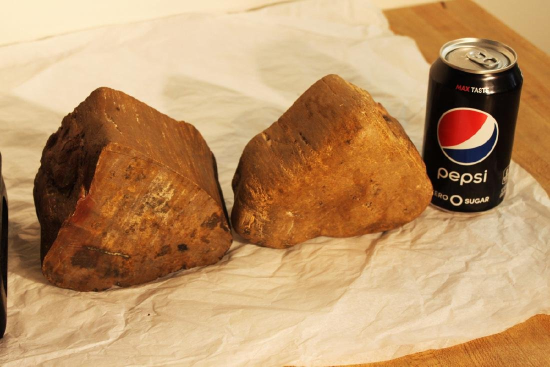 Two Pieces Fossil Wood on Wood Stand - 6