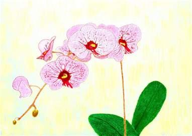 """Déjà Vu"", (Phalaenopsis Hybrid); Pastel"