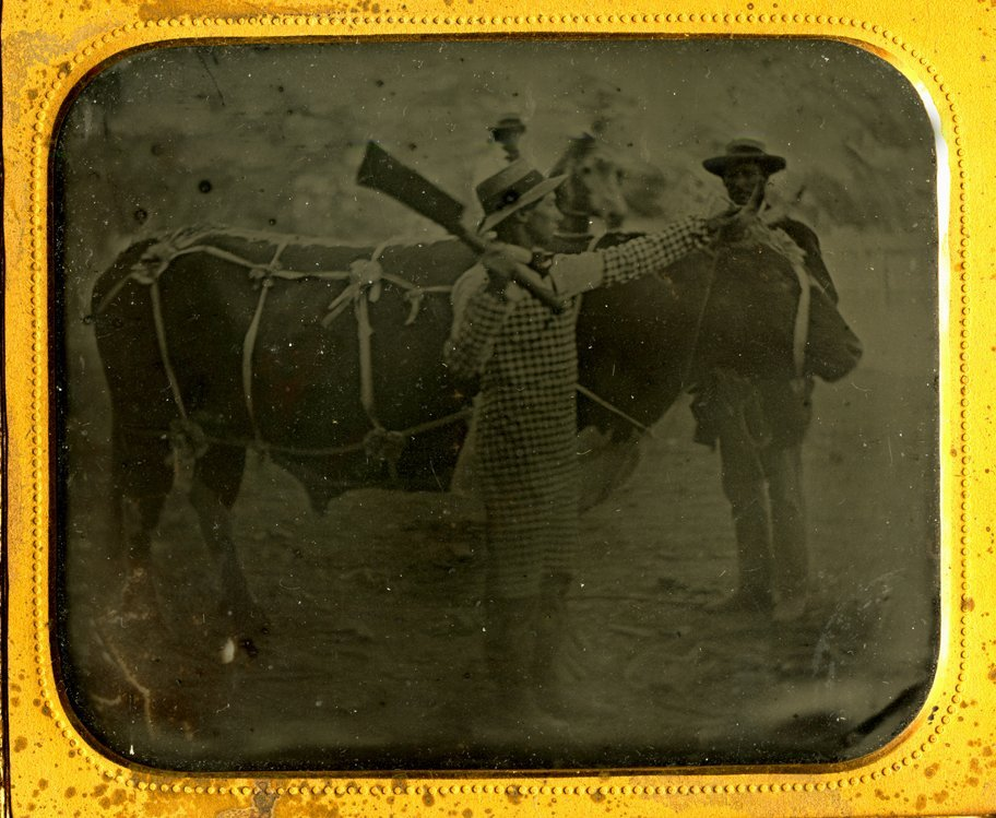 Butchering a steer. 1/6 plate ambrotype.