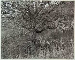 """George Tice, """"Oak Tree Holmdel New Jersey 1970,"""