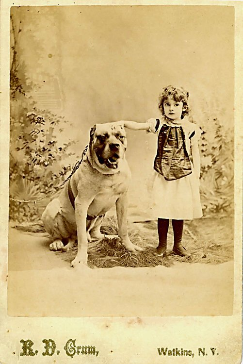 Large dogs. 3 cabinet cards. - 3