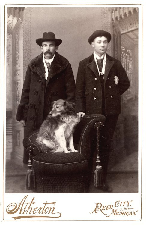 Dogs on chairs. 5 cabinet cards. - 2