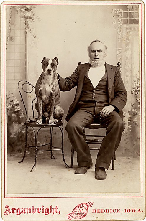 Dogs on chairs. 5 cabinet cards. - 3