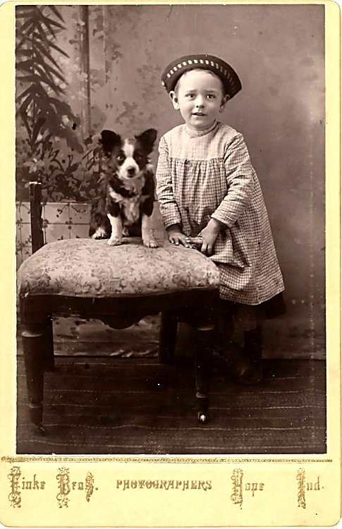 Dogs on chairs. 5 cabinet cards. - 4