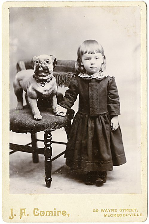 Dogs on chairs. 5 cabinet cards. - 5