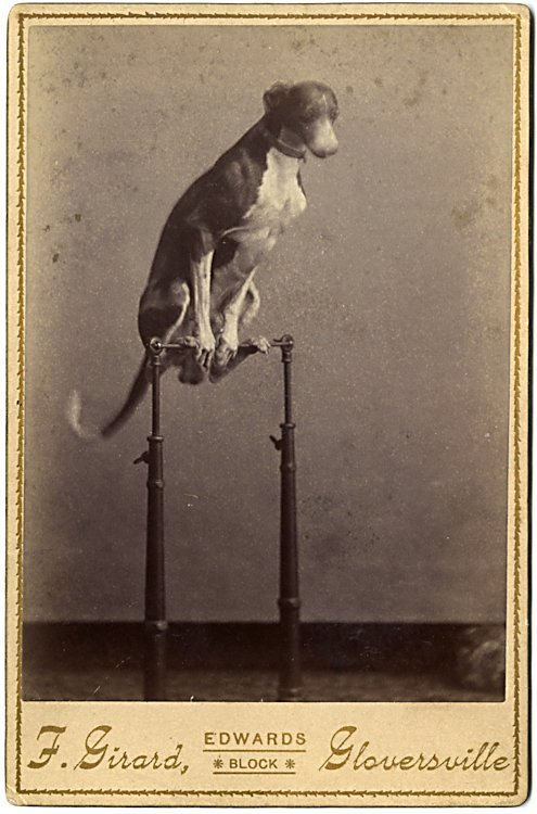 Trick dogs. 3 cabinet cards. - 3