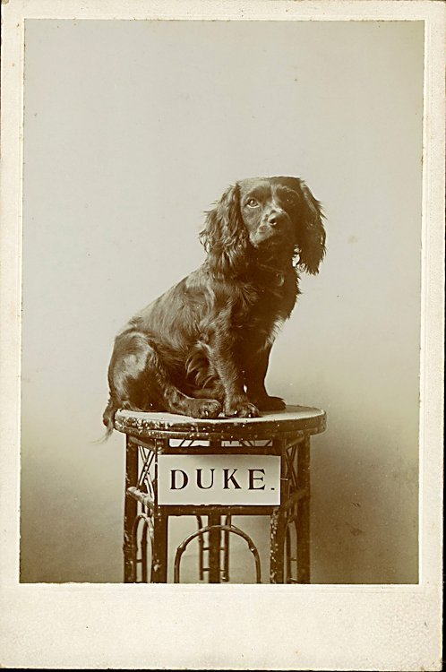 Dogs on columns. 5 cabinet cards.