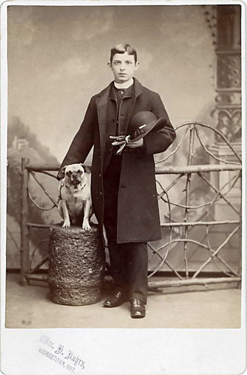 Dogs on columns. 5 cabinet cards. - 2