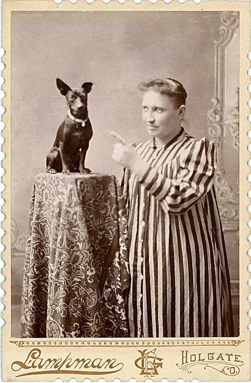 Dogs on columns. 5 cabinet cards. - 4