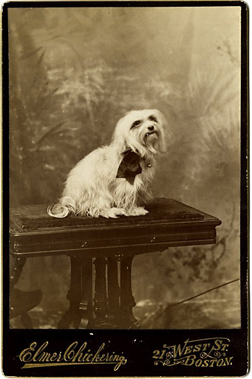 Dogs on columns. 5 cabinet cards. - 5