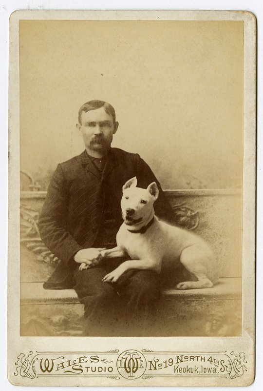 Dogs on laps. 4 cabinet cards. - 2