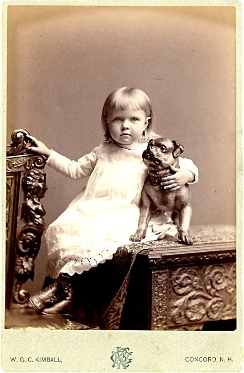 Pug dogs. 3 cabinet cards.