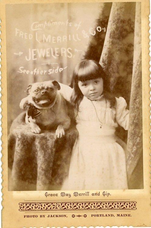 Pug dogs. 3 cabinet cards. - 2