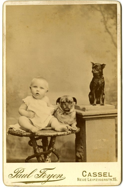 Pug dogs. 3 cabinet cards. - 3