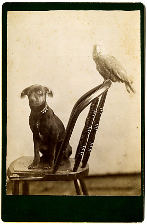 A dog and a bird. 2 cabinet cards. - 2