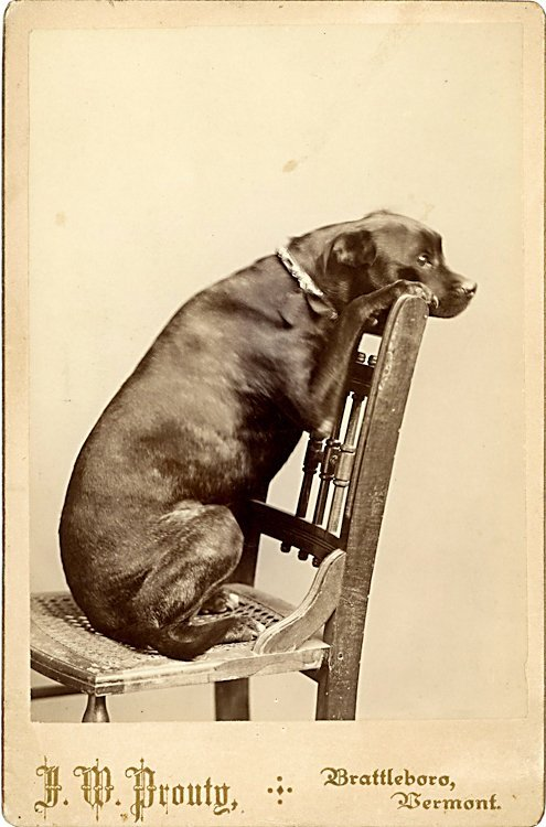 Dogs of the same breed. 3 cabinet cards.