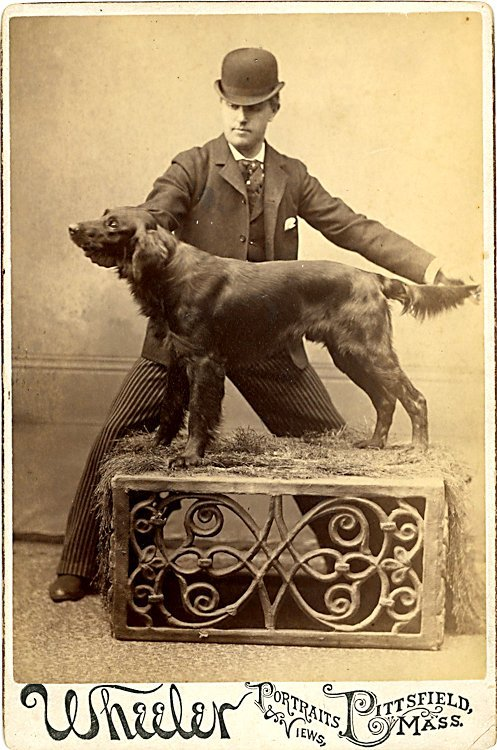 Dogs of the same breed. 3 cabinet cards. - 2