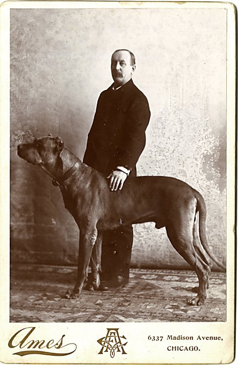 Dogs of the same breed. 3 cabinet cards. - 3