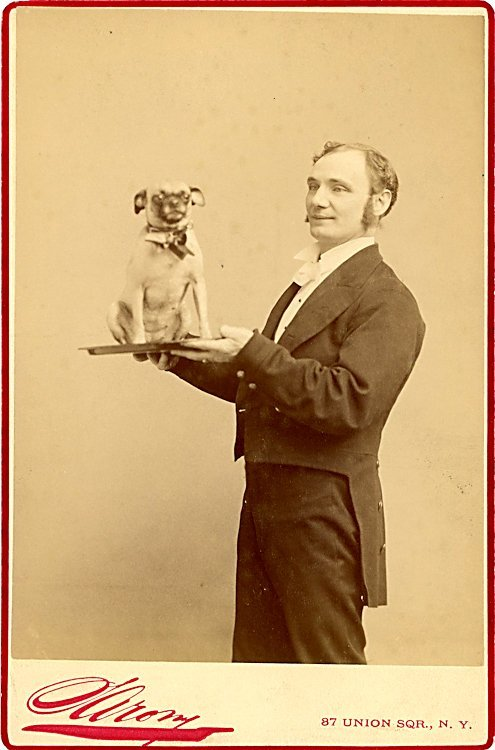 Dogs being carried. 2 cabinet cards