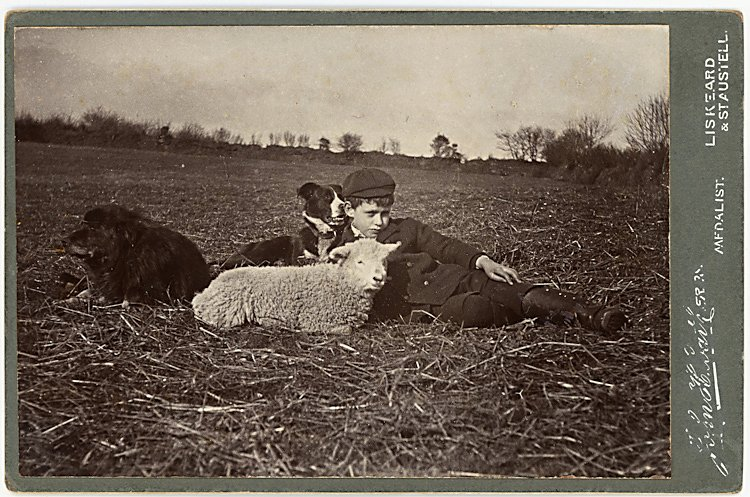 A boy reclines in a field with a dog and a sheep.