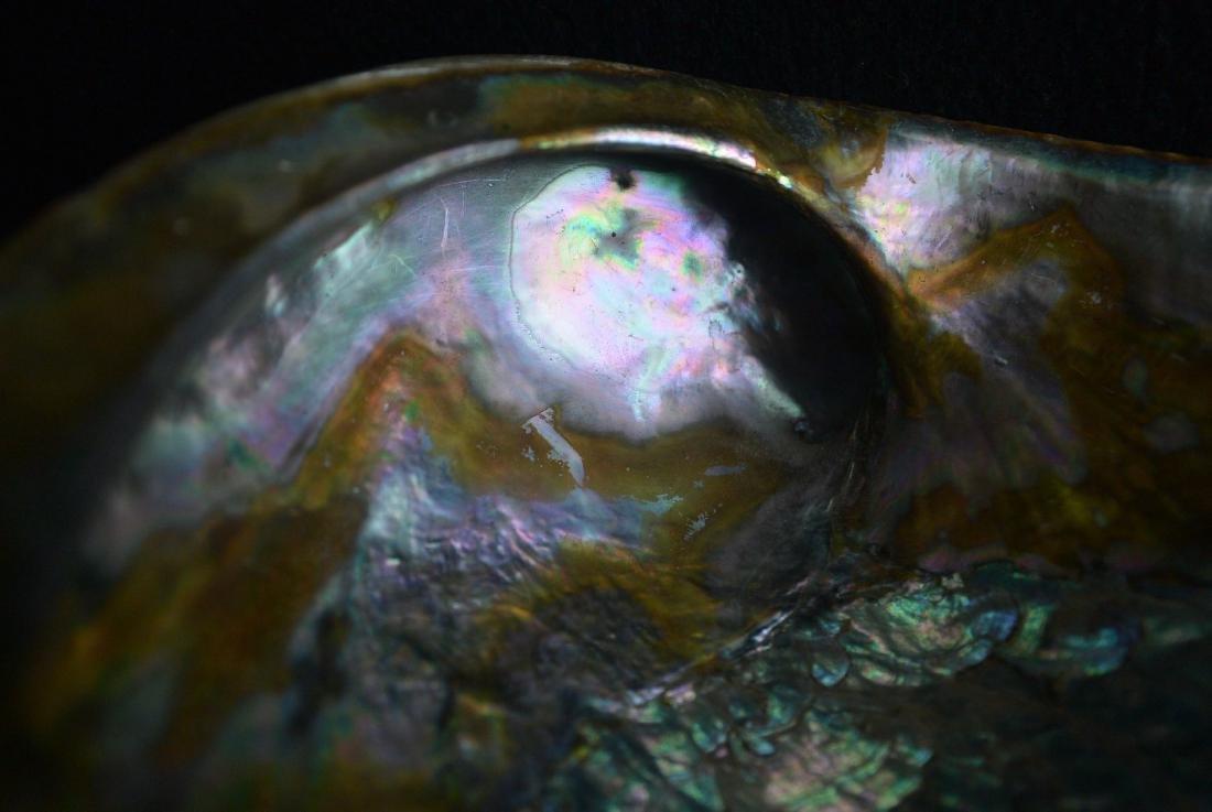 A Rare Blue gold color shell - 10