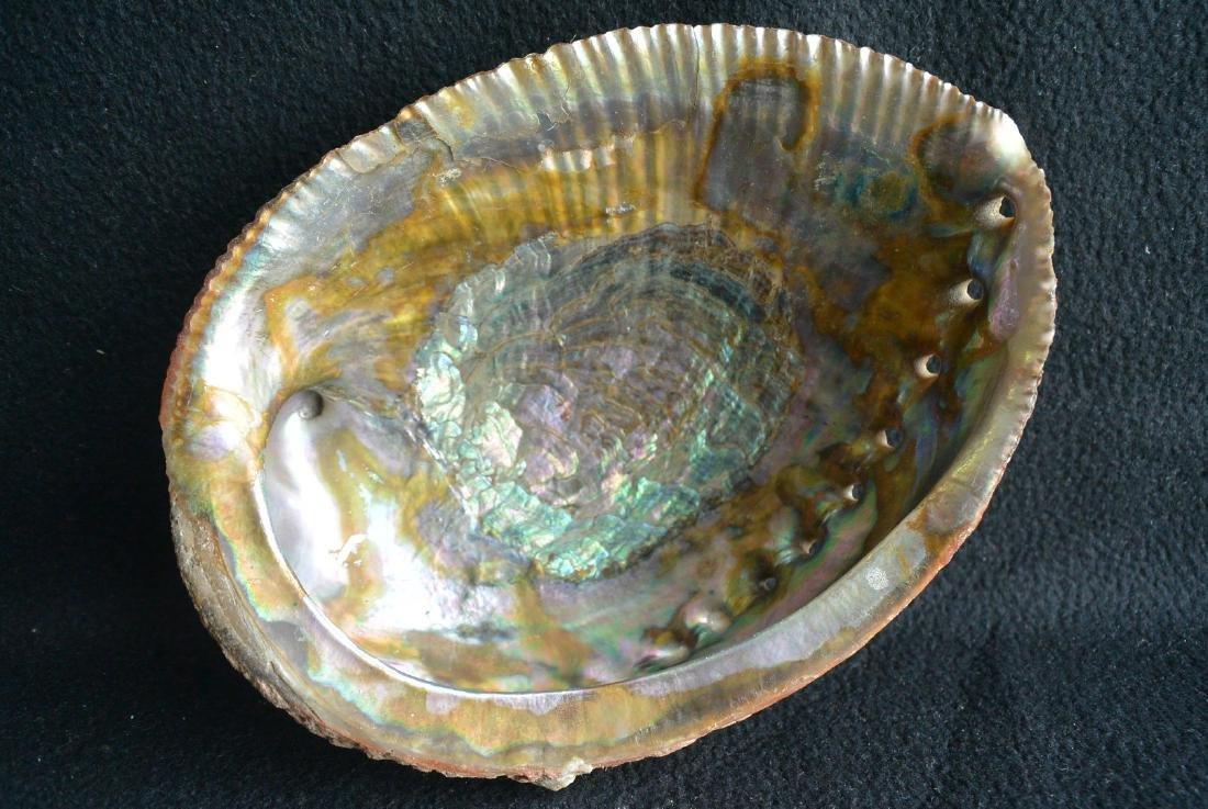 A Rare Blue gold color shell