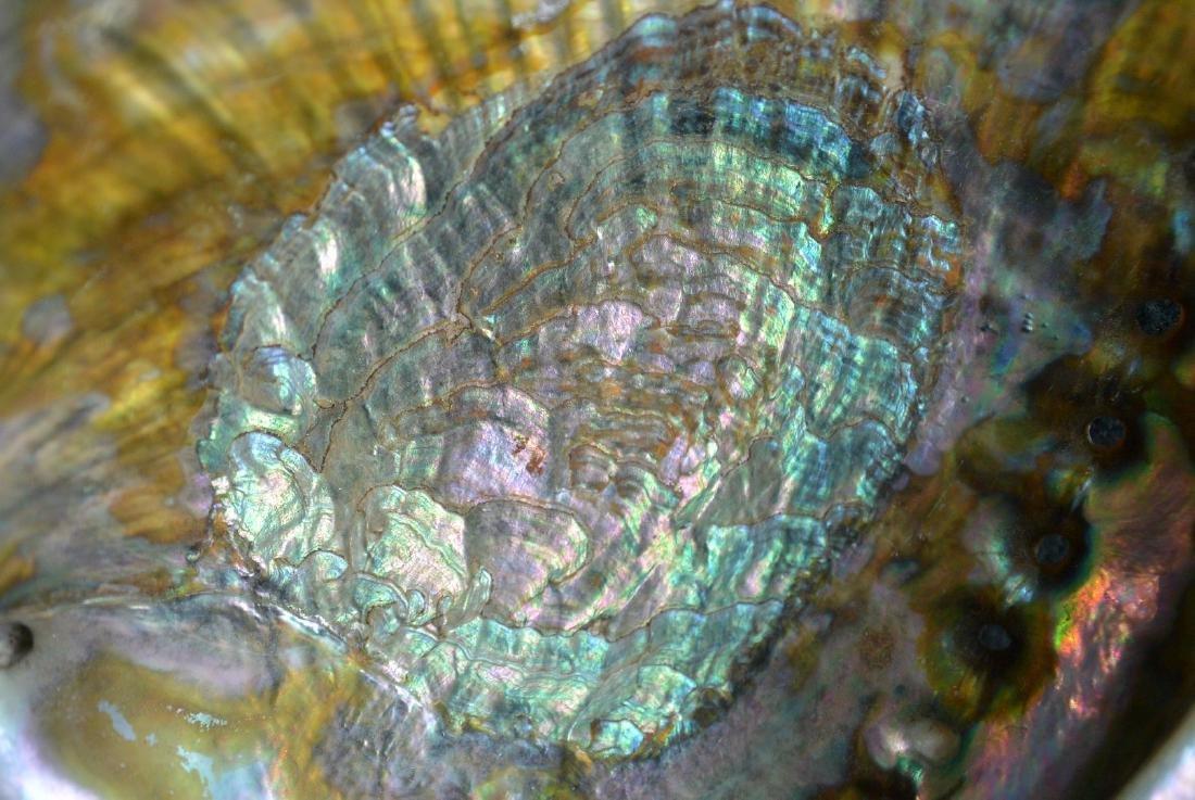 A Rare Blue gold color shell - 2