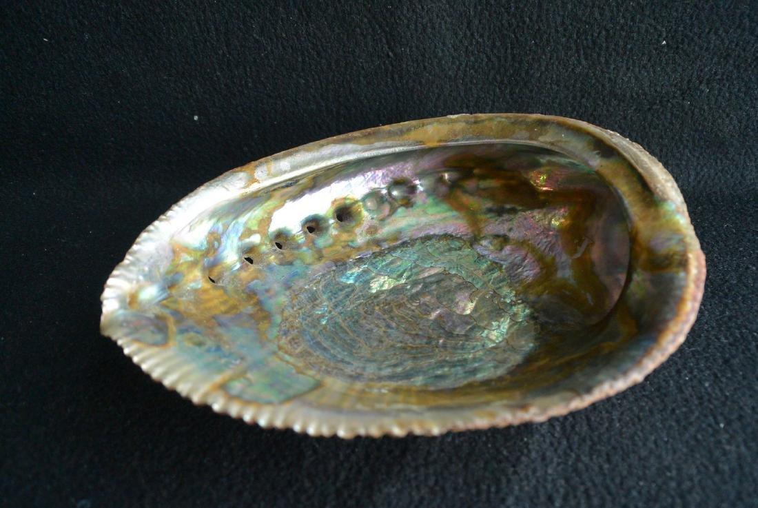 A Rare Blue gold color shell - 8