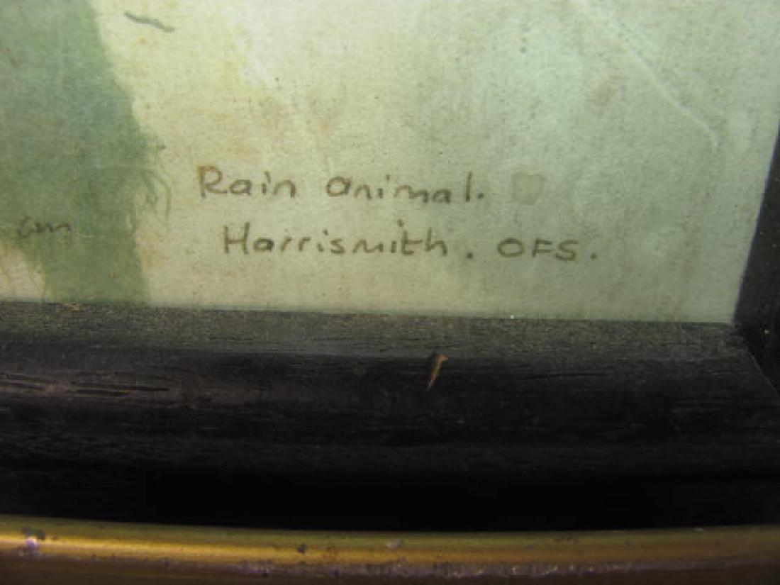Rain Animal Harrismith - 2