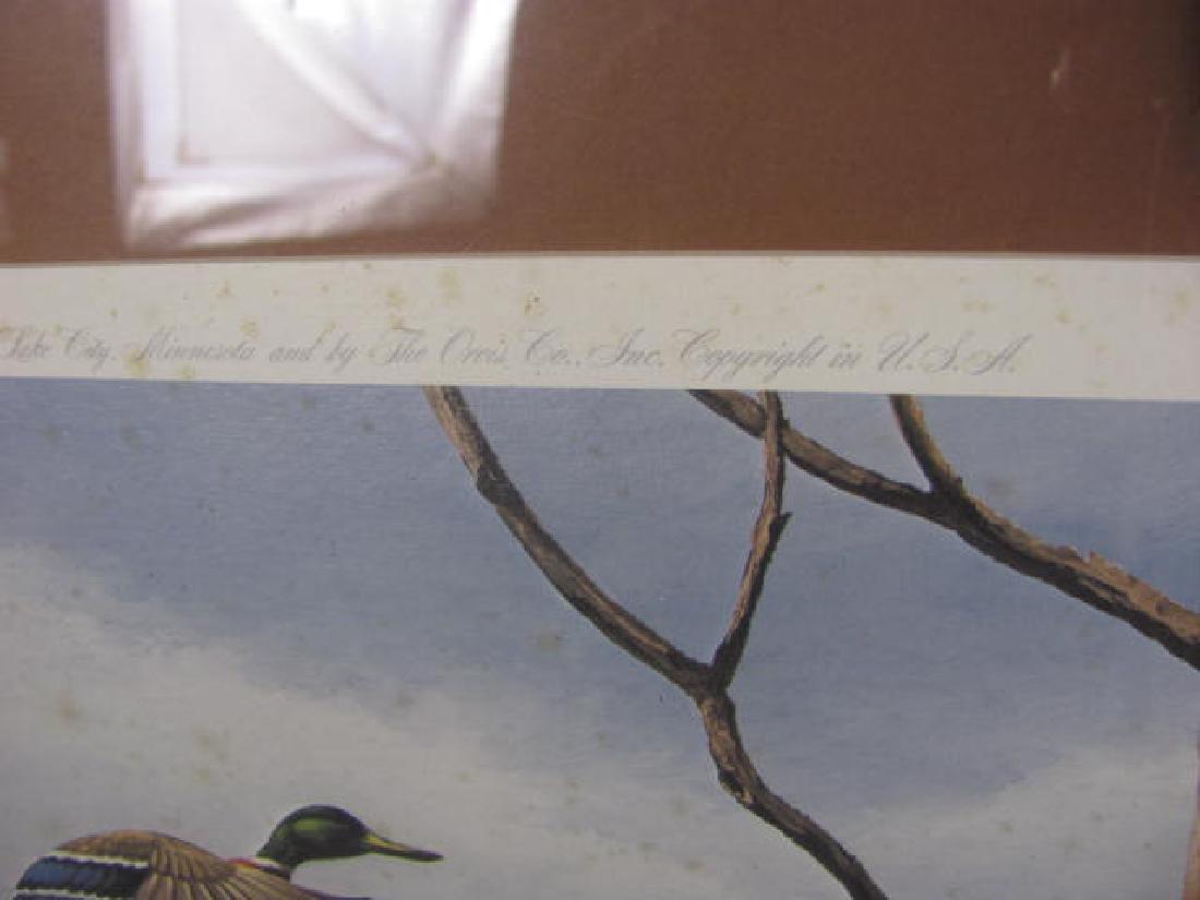 Maas Signed Mallard Duck Print - 4