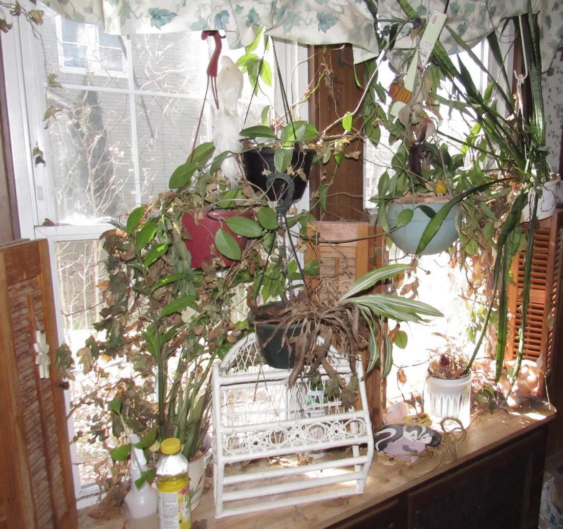 Plants & Wicker Shelf