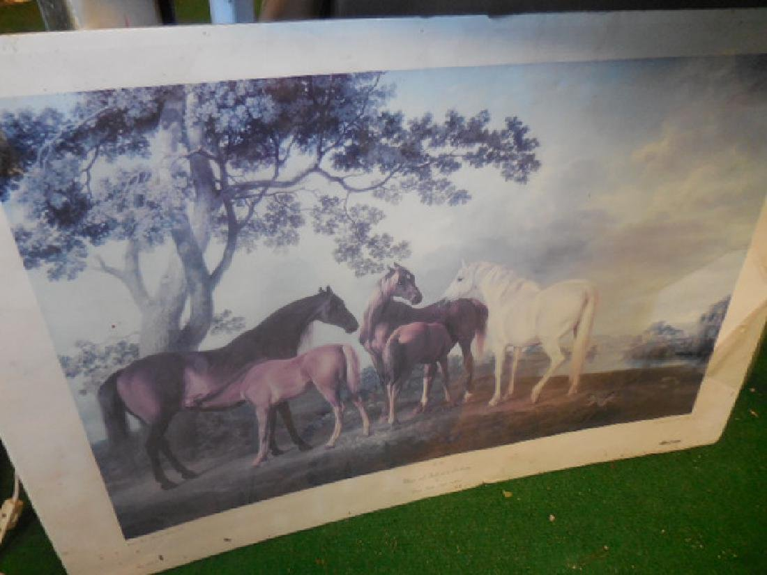 Mares and Foals Horse Print